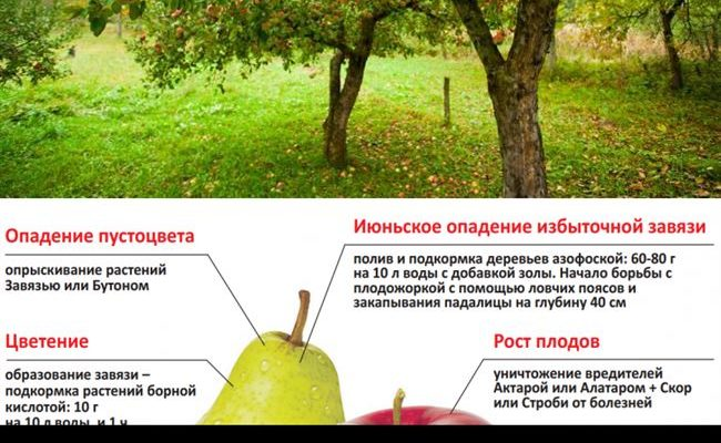 Уход за яблоней — советы на каждый сезон