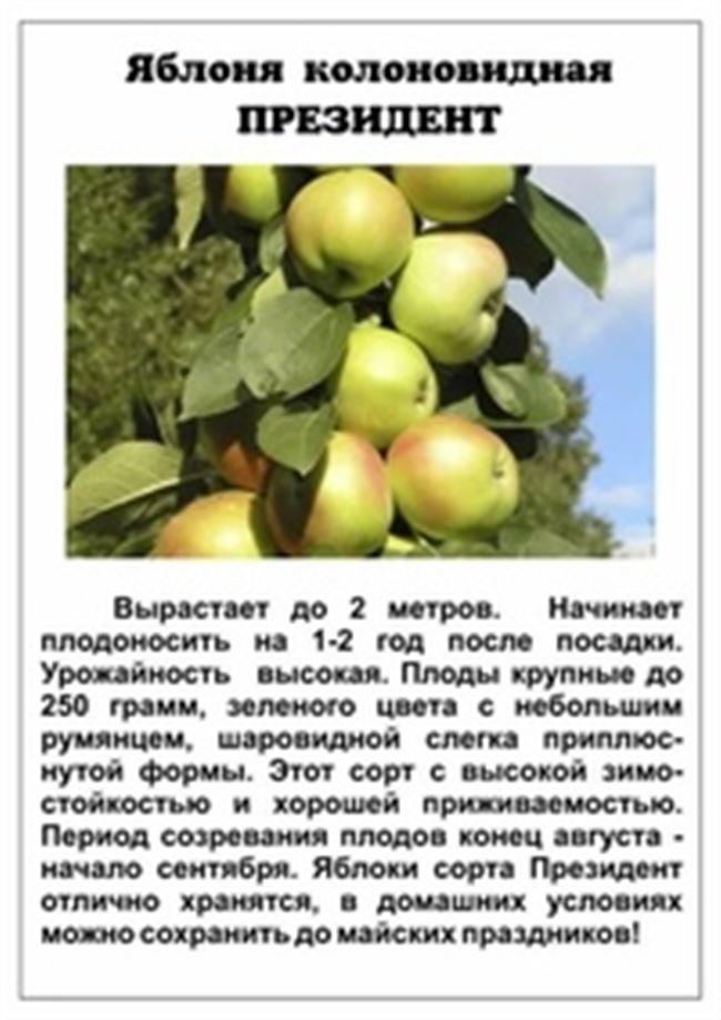 Уход за яблоней Президент