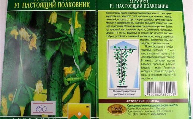 Универсальный сорт огурцов «Настоящий полковник», любимый многими дачниками