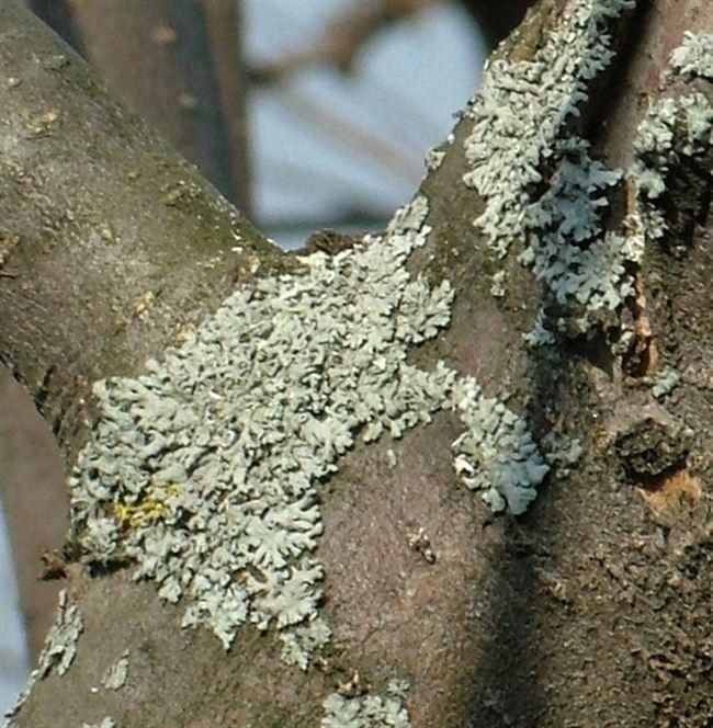 Устранение садовых муравьев
