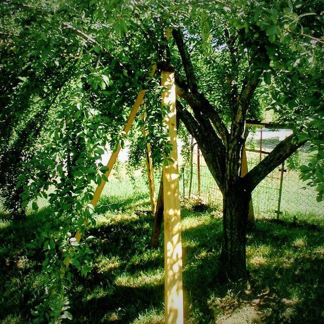 Виды подпорок для яблонь, сделанные своими руками