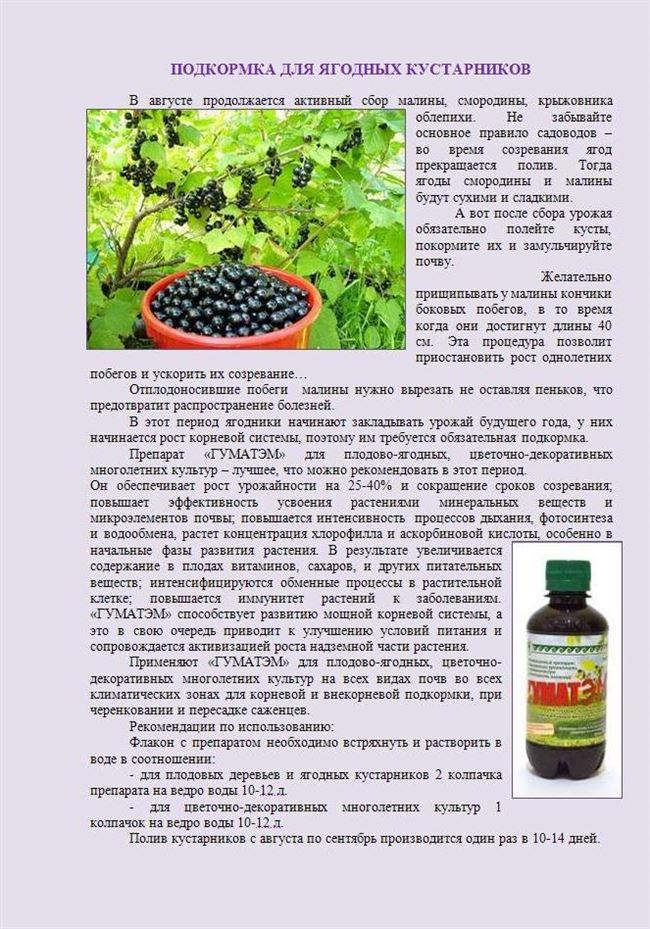 Внесение удобрений и подкормка розовой смородины