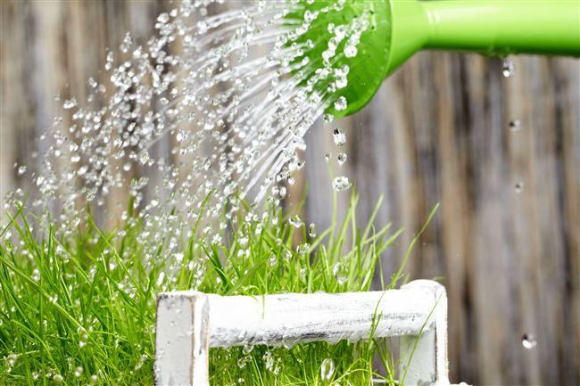 Вода с мылом