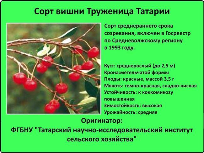 Вредители, характерные для вишни Чудо — таблица