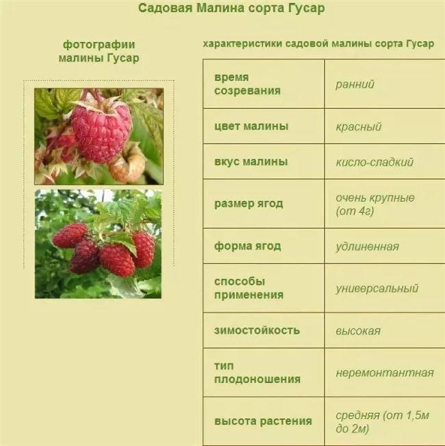 Вредители малины и их характеристика — таблица