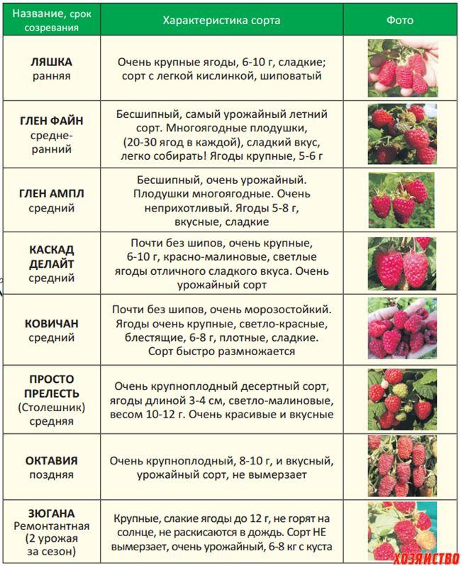 Вредители сорта — таблица