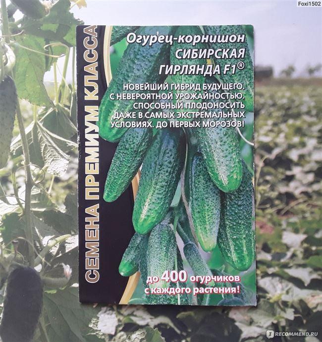 Выращивание и посадка рассады